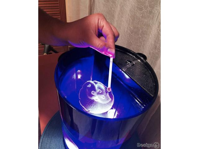 Jellyfish Cylinder Nano 3 - Tube aquarium for jellyfish Jellyfish aquariums